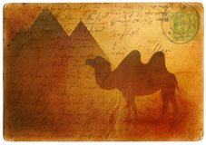 Camel postcard Royalty Free Stock Photos