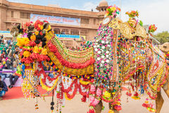 Camel procession. Bikaner, India, 14th January 2017 - Camel owners parade their decorated camels at the Bikaner Camel Mela in Rajastan, India royalty free stock photo