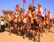 Camel procession at Desert Festival, Jaisalmer, India Royalty Free Stock Photo