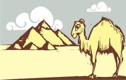 Camel Pyramid Stock Image