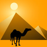 Camel & Pyramids Royalty Free Stock Images