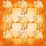 Camel and pyramids Stock Photos