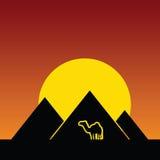 Camel and pyramids color  Stock Photos