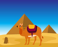 Camel and pyramids Stock Image