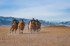 Camel race competition during the Golden Eagle Festival held in the winter in Ulgi Mongolia stock images