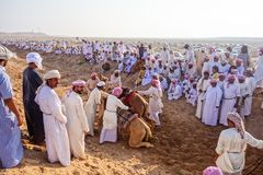 Camel Race Stock Photography