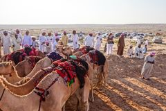 Camel Race Royalty Free Stock Photo