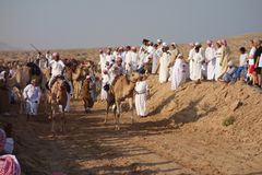 Camel Race Stock Image