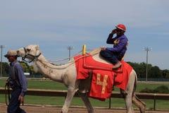 Camel race Royalty Free Stock Photo