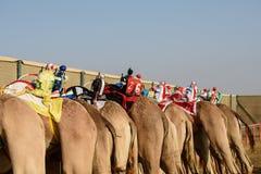 Camel race. In sunny desert Stock Photo
