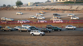 Camel Racing. Three camels run towards the finish line, pursued by hoards of vehicles honking their horns to encourage the camels to run faster. Camel racing is stock photo