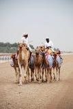 Camel racing Stock Image
