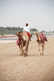 Camel racing Stock Images