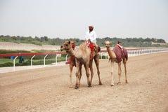 Camel racing Stock Photography