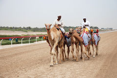 Camel racing Royalty Free Stock Photography