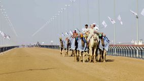 Camel racing in Dubai stock video