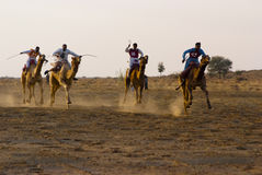 Camel racing in Jaisalmer Royalty Free Stock Image
