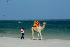 Camel with saddle and black man on the beach. Camel with red saddle on the ocean beach, Indian ocean entertainment in Africa Stock Photos