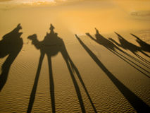 Camel reflection on the sand at sunset, Sahara Desert, Morocco. Camel ride reflection on the sand at sunset, Sahara Desert, Morocco. Summer photo. Holiday Stock Photo