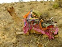 Camel resting during camel safari, Thar desert, India Royalty Free Stock Photos