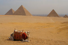 Camel resting near Pyramids Royalty Free Stock Images