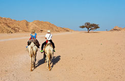 Camel ride. Camel riding in the desert, Egypt Stock Photography