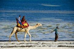 Camel ride. A muslim couple ride a camel along a sandy beach in Mombasa, Kenya stock photo