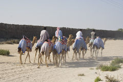 Camel Ride Royalty Free Stock Photo