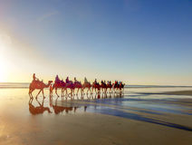 Camel Ride on Cable Beach, Broome, Western Australia. Sun starting to set in the background Stock Image