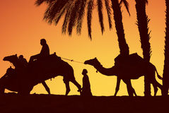Camel ride Royalty Free Stock Photo