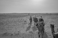 Camel Ride in the desert of Rajasthan, India. Camel ride in the Thar Desert in Rajasthan India at 20 kilometers from pakistan. Such amazing to ride across the stock photo