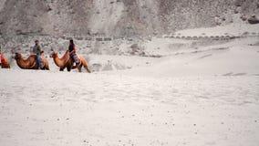 Camel ride on desert stock video