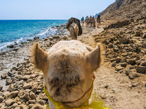 The camel ride Royalty Free Stock Photos