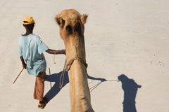 Camel ride Royalty Free Stock Image