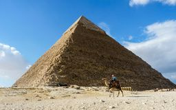A camel ride in front of the pyramid of Giza. Blue Sky stock photo