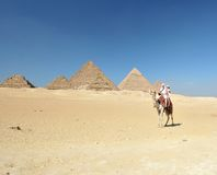 Camel ride by Giza pyramids Stock Images