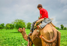 Camel Ride in an Indian Rural Village Royalty Free Stock Photos