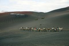 Camel ride in Lanzarote Royalty Free Stock Photography