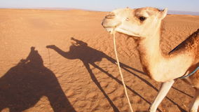 Camel Ride, Morocco stock footage