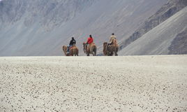 Camel Ride In Nubra-1. Royalty Free Stock Image