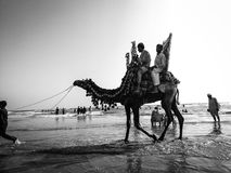 Camel ride. People riding on camel at the sea view Stock Photo
