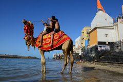 Camel Ride. Pilgrimages are enjoying camel ride at the sacred Gomti River, several people take a dip in the waters here before proceeding to the temple Royalty Free Stock Images