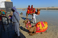 Camel Ride. Pilgrimages are enjoying the tour with camel ride at the sacred Gomti River bed during low tide, several people take a dip in the waters here before Stock Photo