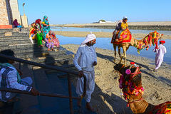 Camel Ride. Pilgrimages are enjoying the tour with camel ride at the sacred Gomti River bed during low tide, several people take a dip in the waters here before Royalty Free Stock Image
