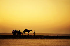 Camel Ride. At the Rann of Kutch Royalty Free Stock Photography