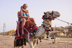 Camel Ride. Red Sea, Egypt, Sinai - March 23, 2013: Tourists are riding a camel on the beach in Egypt, Red Sea Royalty Free Stock Photography