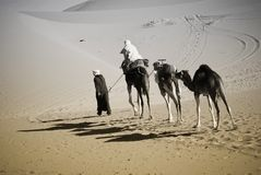 Camel ride in Sahara Royalty Free Stock Images