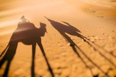 Camel ride shadows, Sahara Royalty Free Stock Image