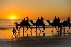 Camel ride into the sunset. Camel caravan led by a boy riding along Cable Beach in Broome, Western Australia at sunset. nnnn royalty free stock photo
