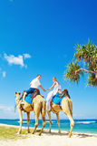 Camel ride on wedding day Stock Image
